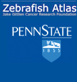zebrafish atlas project
